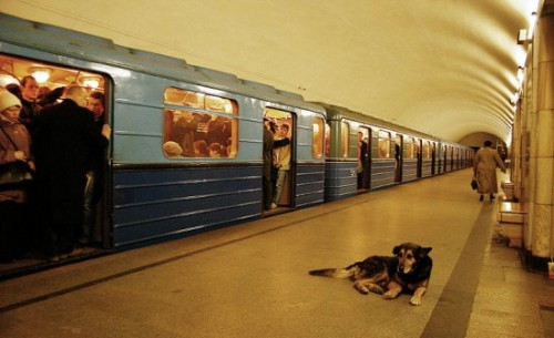 Moscow-Train-Dog-2