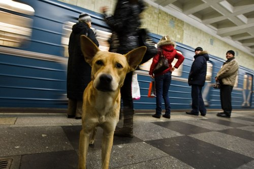 Moscow-Train-Dog-3