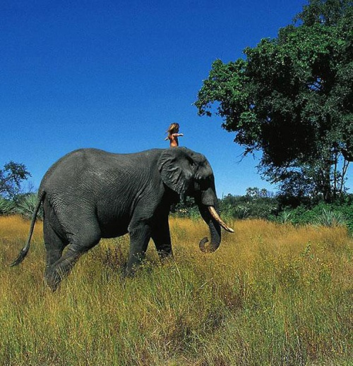 real-life-mowgli-tippi-degre-african-wildlife-16