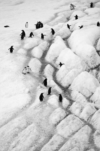 Antarctica_8176